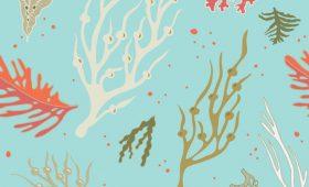 Seahorse 'n Seaweed pattern/swimwear